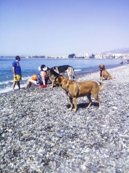 Playa Can en Motril (AYTO. MOTRIL /ARCHIVO)