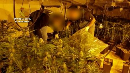 Imagen de una de las plantaciones de marihuana desmantelada (GUARDIA CIVIL)